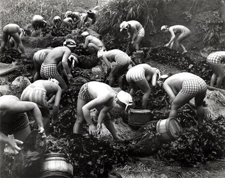 Harvesting Seaweed, 1956, by Iwase Yoshiyuki